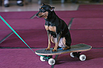 Min Pin on Skateboard
